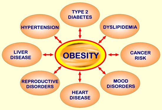 obesitycircl